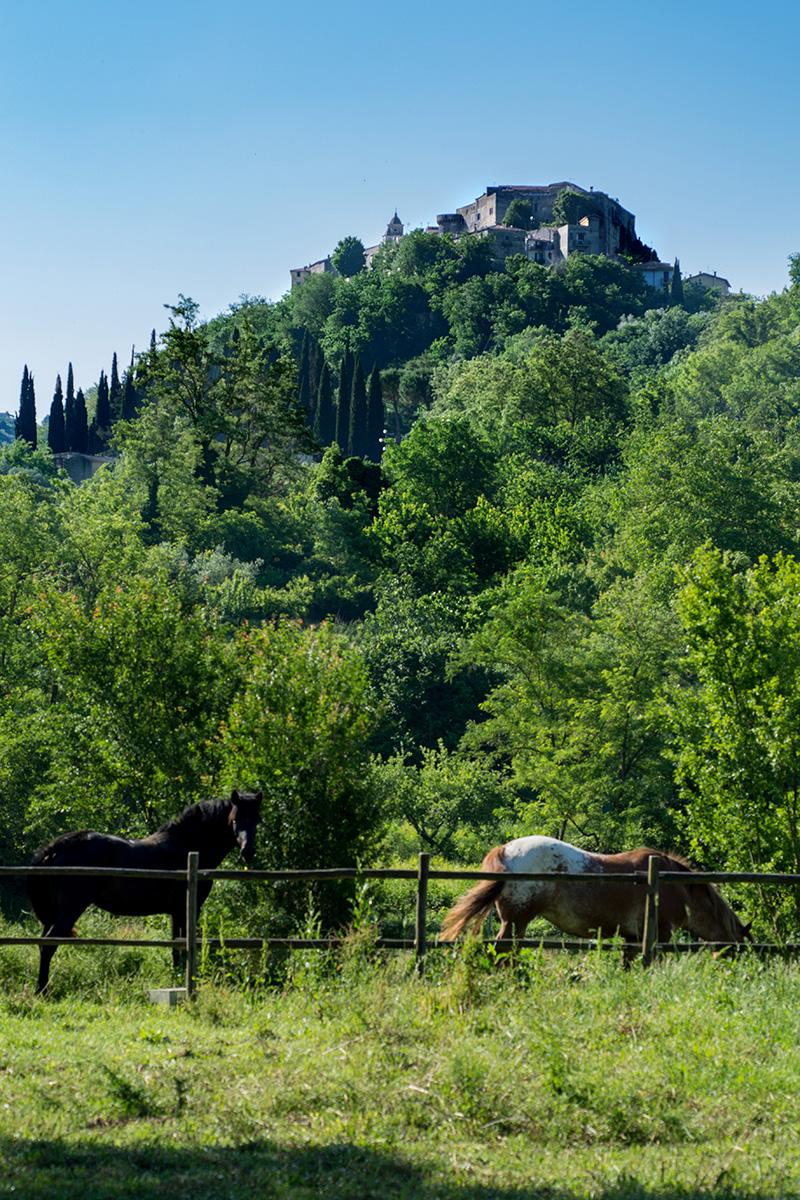 Montelibretti cavalli