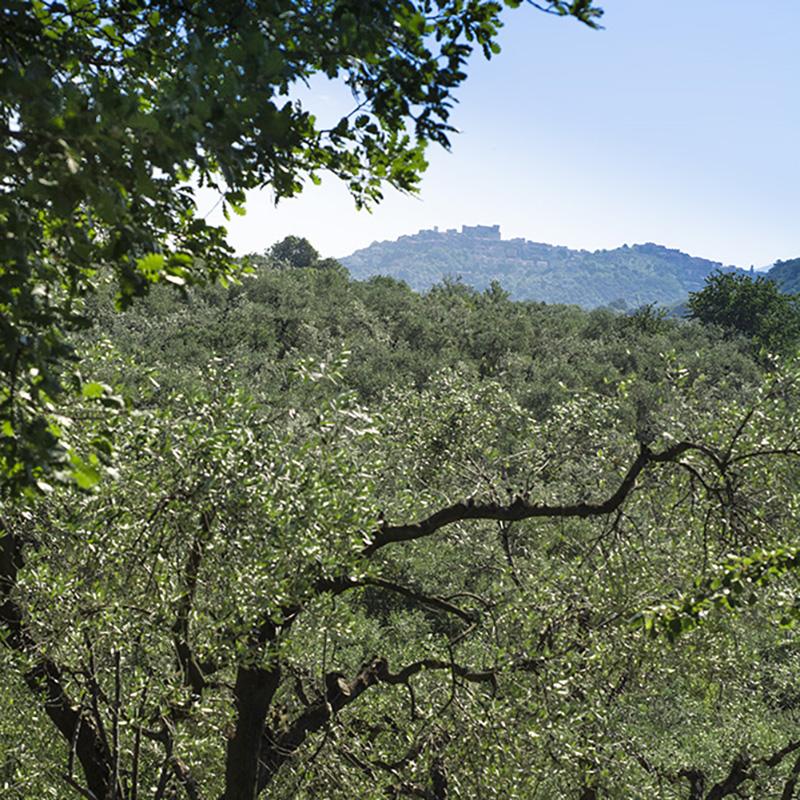 Olivi Montelibretti